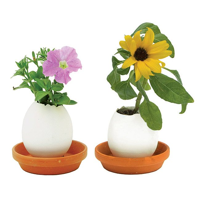 Eggling Crack & Grow Flowers