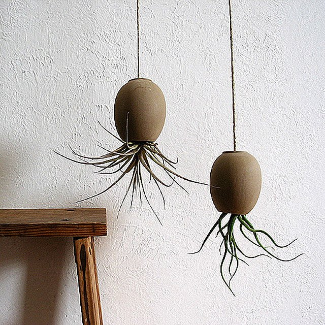 Hanging Air Plant Pod 2