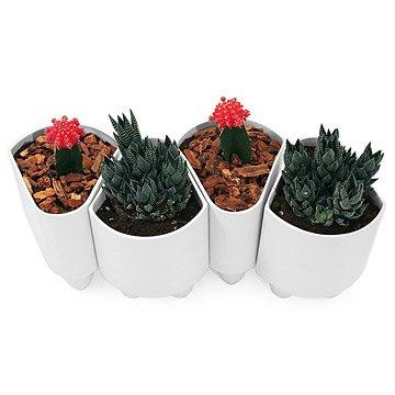 Ceramic Modular Planter