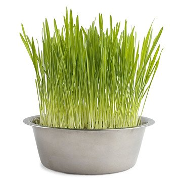 Dog Grass Bowl