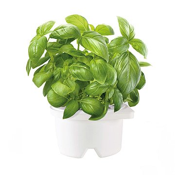 Self Watering Herb Smartpot