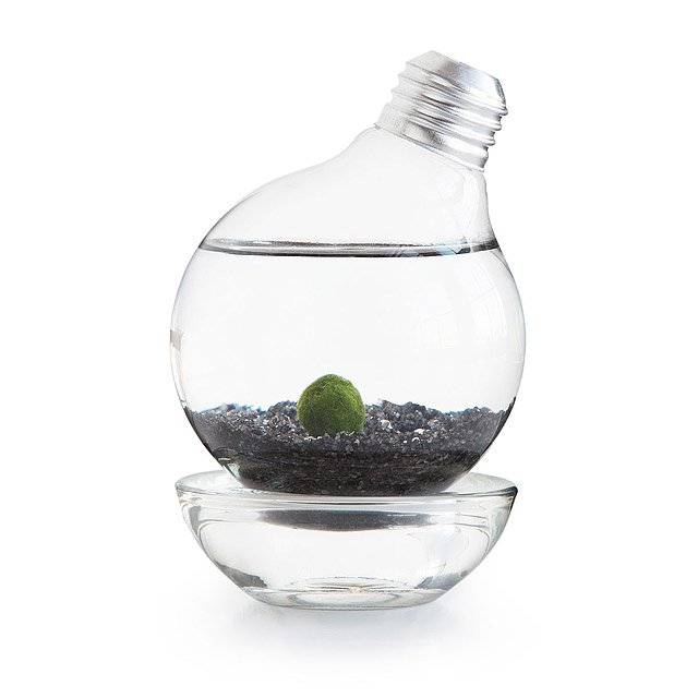 Marimo Moss Ball Light Bulb Aquarium 1