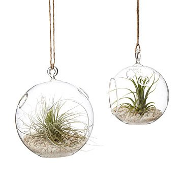 Hanging Globe Terrarium Garden - Set of 2