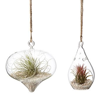Hanging Teardrop Terrarium Garden - Set of 2