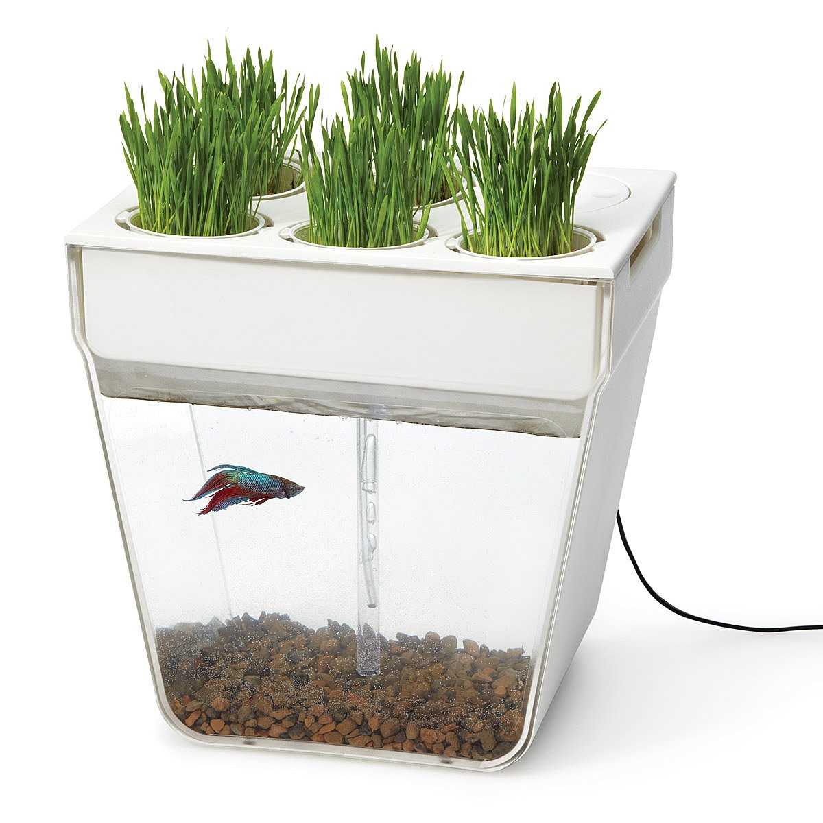 Countertop Herb Garden Kit : Water Garden Fishbowl & Herb Garden UncommonGoods