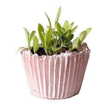 DIY Cupcake Planter Kit