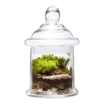Find Your Path Terrarium
