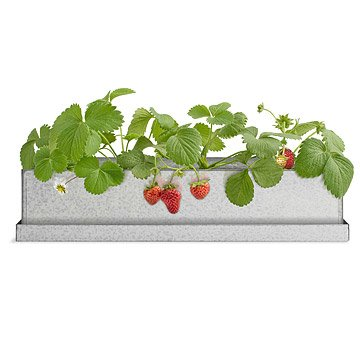 Strawberry Windowsill Growbox