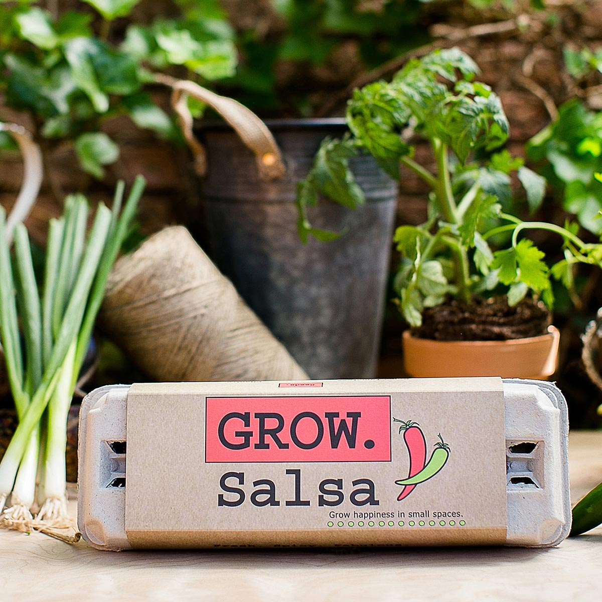 Salsa Growing Kit