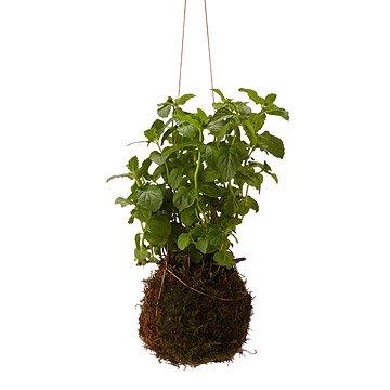 mini string garden