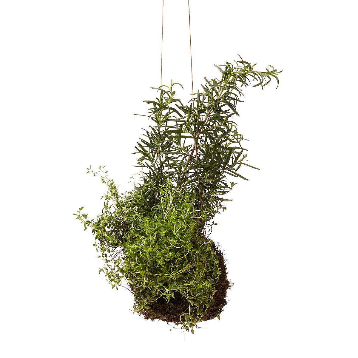 Rosemary & Thyme String Garden