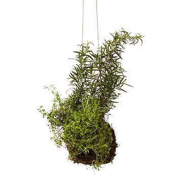 Rosemary & Thyme String Garden Herbs, Herb Seeds, Herb Seed, Herb Plants, Herb Garden, Garden Seeds, Vegetable Garden, Seeds