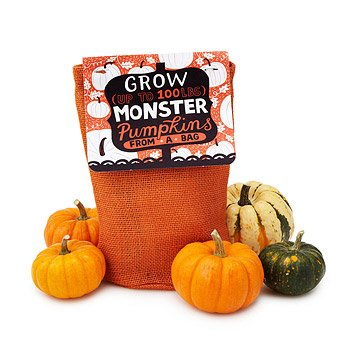 Pumpkin in a Bag Grow Kit