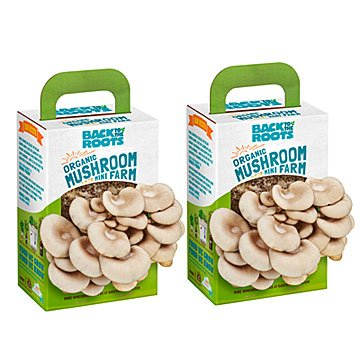 Mushroom Mini Farms - Set of 2