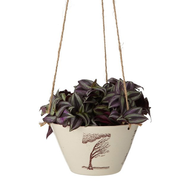 Four Seasons Hanging Planter