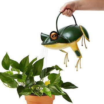 Frankie the Frog Watering Can