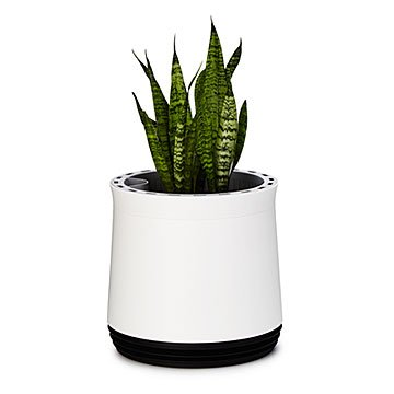 Air Purifying Planter