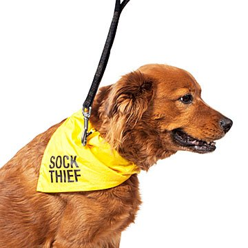Sock Thief Dog Bandana