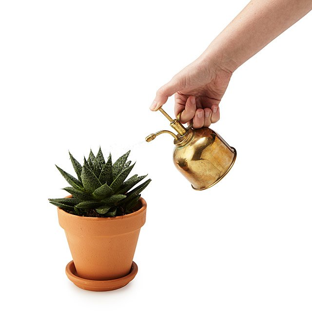 Brass Succulent Mister by Sarah Burrows And Nick Behr