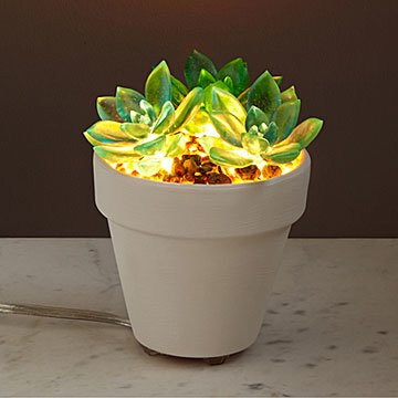Let It Glow Succulent Lamp