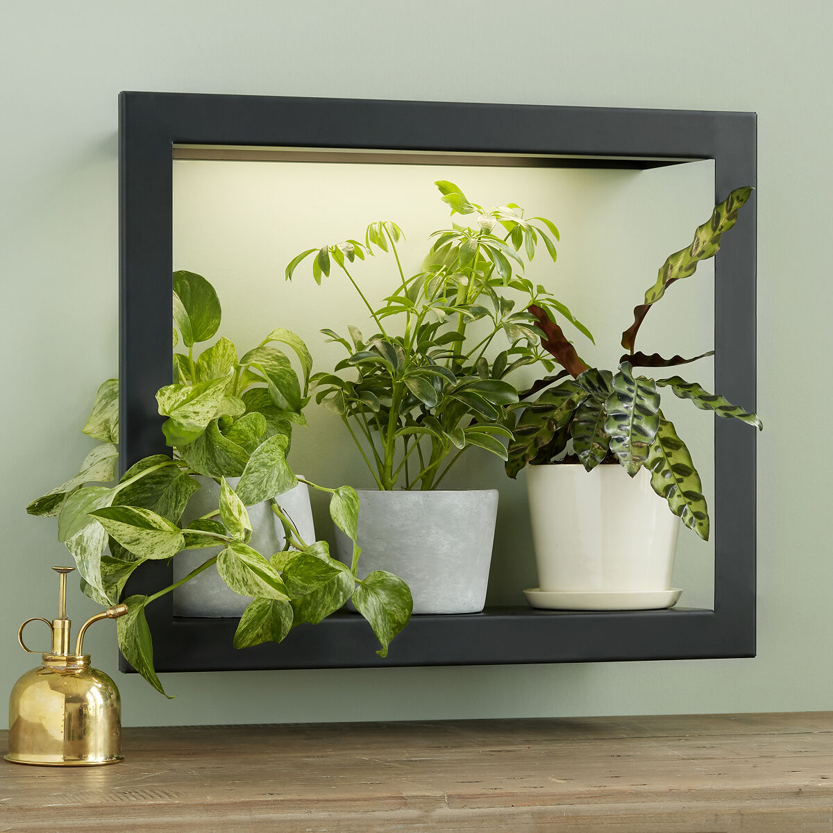 growlight frame shelf plant display uncommongoods
