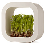 PRAIRIE FACTORY SQUARE | Grass Frame Planter, Grow Patch Of Grass, Indoor Gardening, Nature Indoors | UncommonGoods