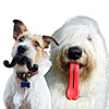 Silly Dog Toys: Mustache & Giant Tongue