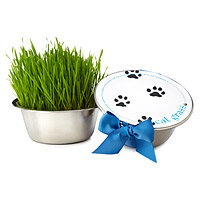 cat grass bowl