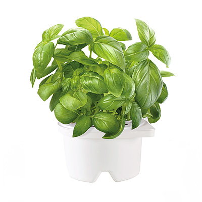 SELF WATERING HERB SMARTPOT