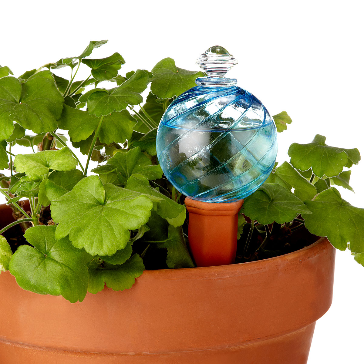 Water Globe Watering Globe And Plant Nanny