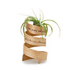 Inspiration Bent Wood Planter