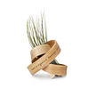 Wisdom Bent Wood Planter