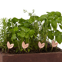 Sprout Herb Markers - Set of 4