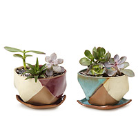 Mauna Planter and Dish