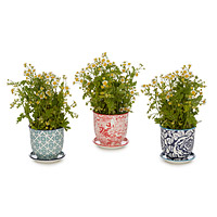 Teacup Planters - Set of 3