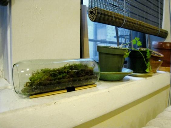 Gift Lab Moss Terrarium The Goods