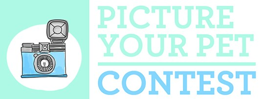 Picture Your Pet Photo Contest | UncommonGoods