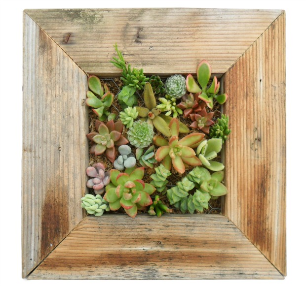 Succulent Living Wall Planter Kit | UncommonGoods