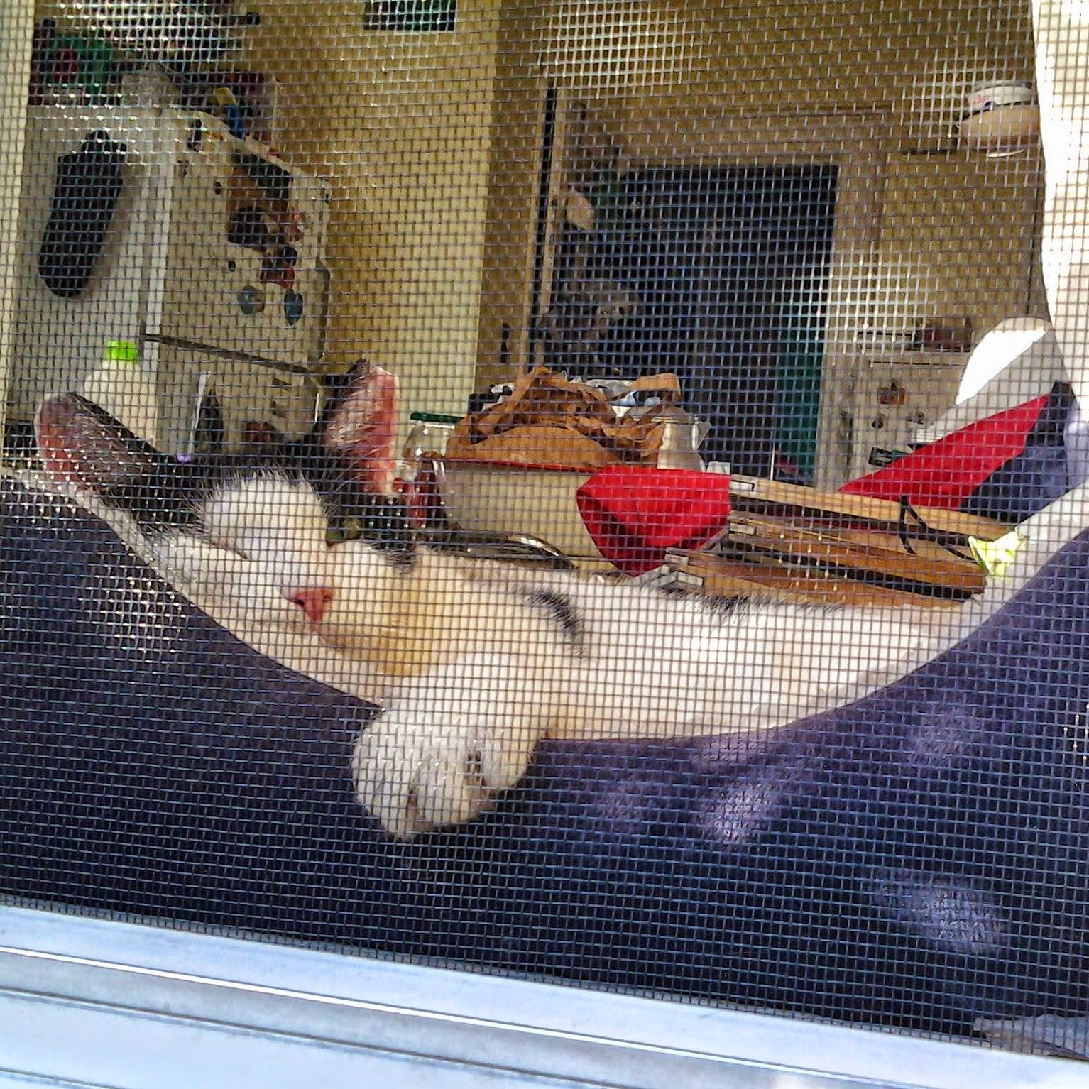 Eddie in window