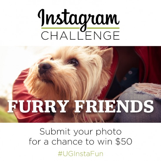 Instagram Challenge | Furry Friends (Part 2)