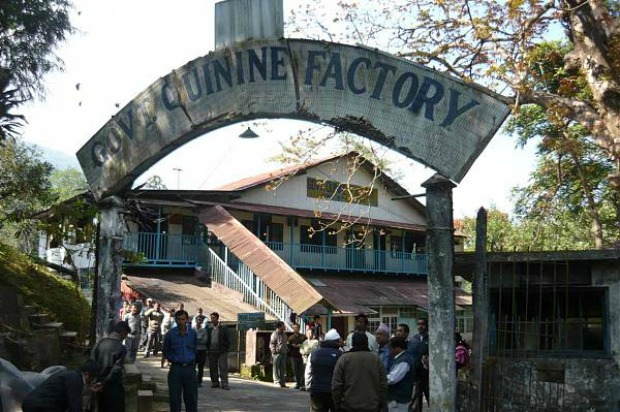 Government quinine factory, Mungpoo, India