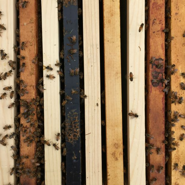 Hive Frames