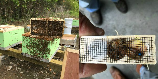 Bees from Honeybrook Farms