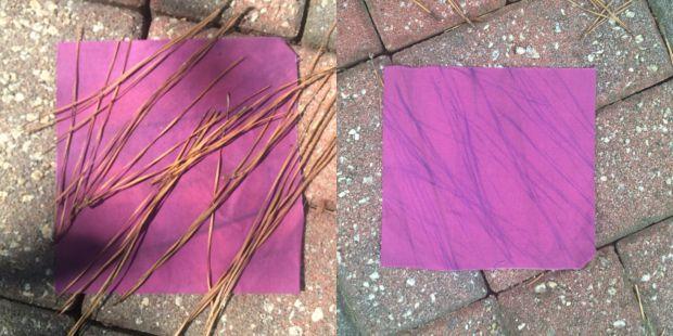 Pine Straw Solar Photography