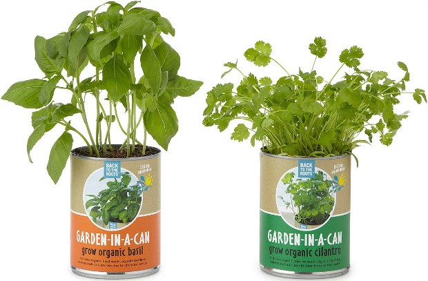 Garden in a Can - Set of 4 - UncommonGoods