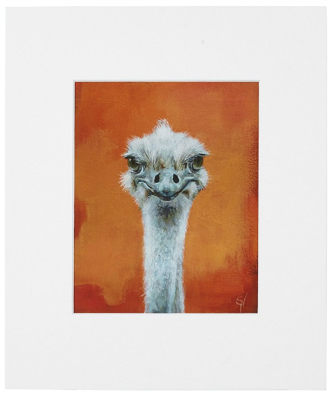 Ned – Ostrich Portrait | UncommonGoods