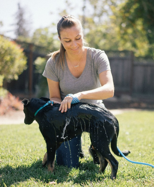 Aquapaw Pet Bathing Mitt | UncommonGoods