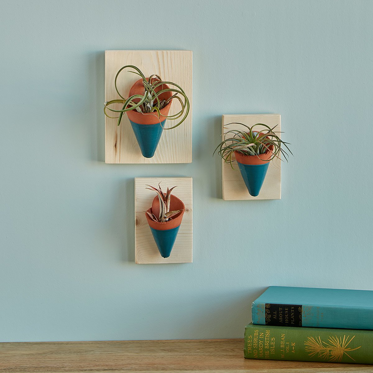 Air Plant Wall Sconces | UncommonGoods