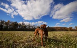 Prizewinning Pets