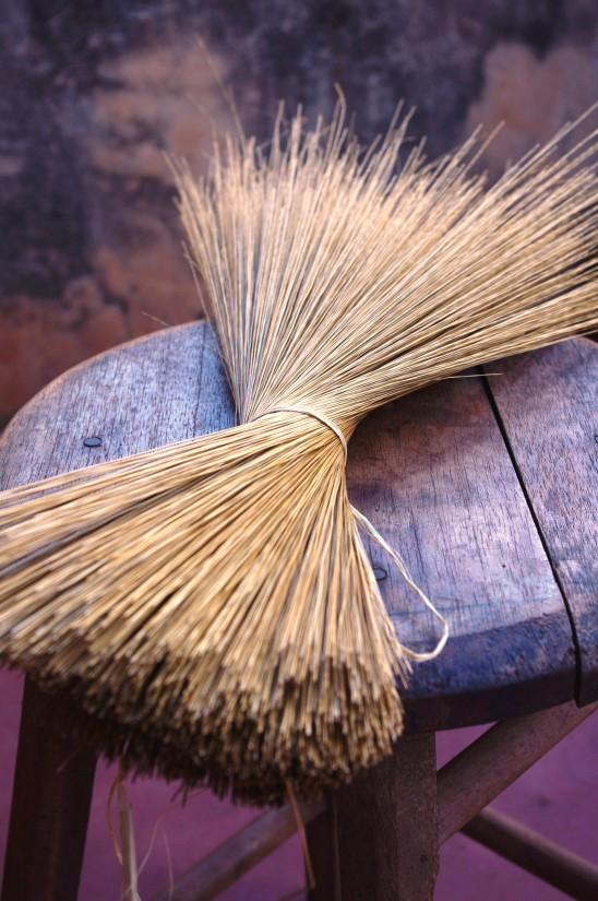 Golden Grass dried
